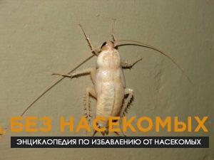Чем опасны белые тараканы