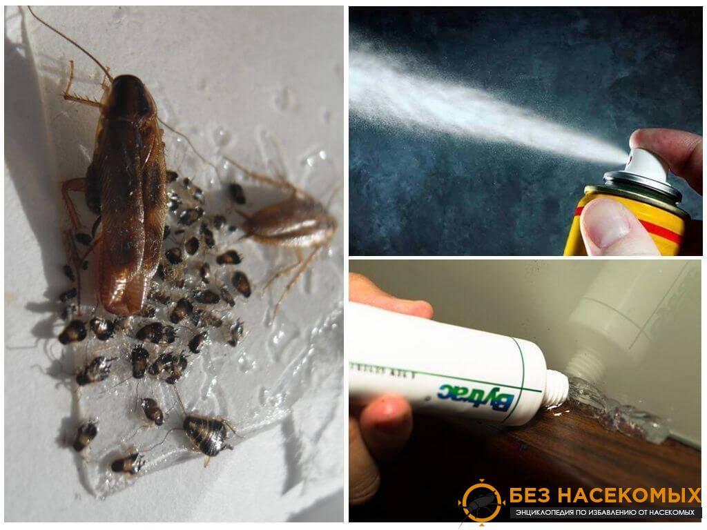 каких средств боятся тараканы в квартире