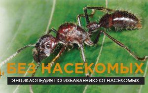 муравей 24 часа