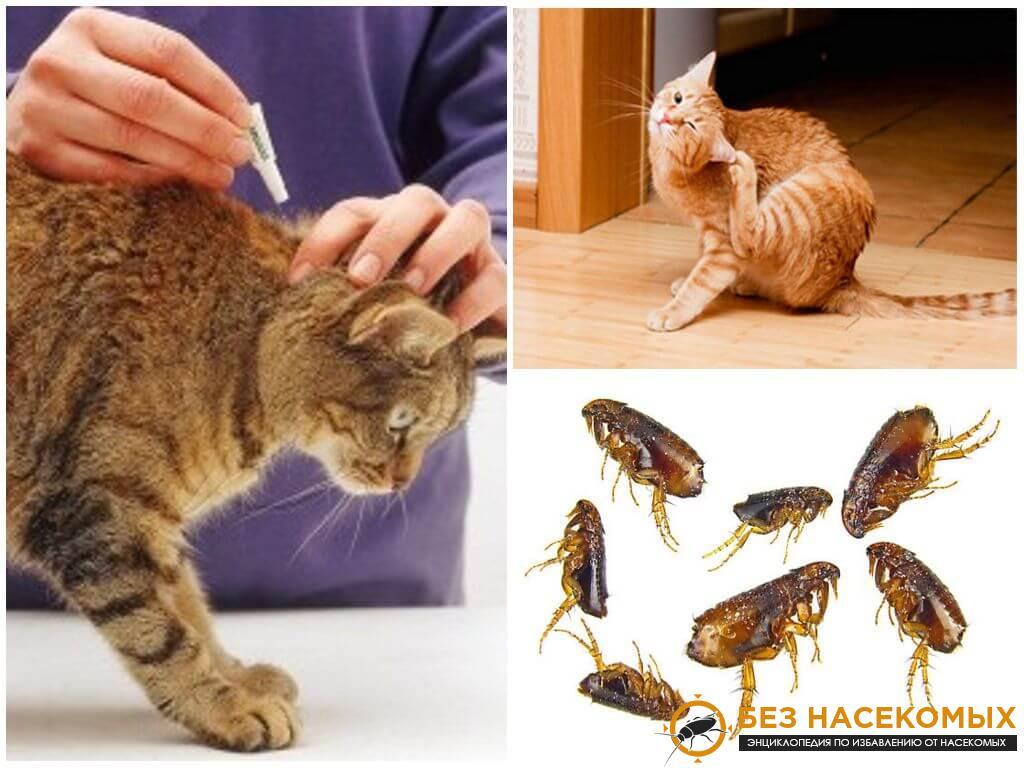признаки появления блох у кошек
