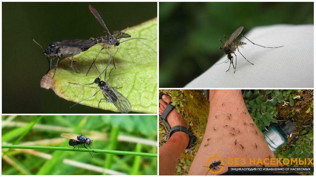 мошки и комары